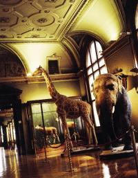 Vienna museum dead giraffe
