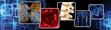 7th World Congress of Biomechanics