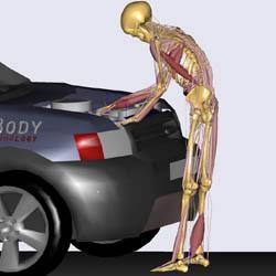 Musculoskeletal modelling (by John Rasmussen)