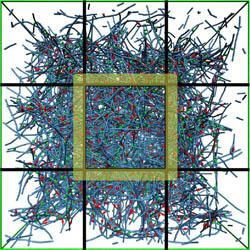 Actin network model (by Carlos Borau)